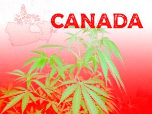 legalización de la marihuana en canadá - cbd y marihuana legal