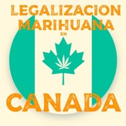 legalización de la marihuana en canadá - cbd y marihuana medicinal