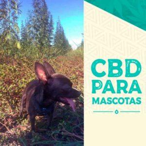 utilizar cbd para mascotas - cbd para perros